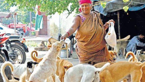 Pratima a ales să fie mamă a peste 400 de căței