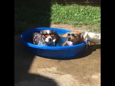 O sâmbătă perfectă cu prietenii la piscină|VIDEO