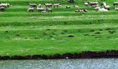 Oile din Insulele Feroe, pe Google Street View