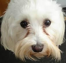 Petele din jurul ochilor, problema majoră semnalată de veterinari | Iata rezolvarea!