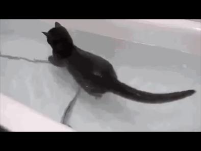 Cine spune că pisicilor nu le place apa? | VIDEO