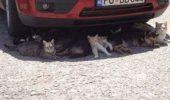 Draga pisicuta – ce ne facem cu aceasta caldura?