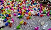Lume nebuna!!!! Pui colorati pentru…amuzament!!!