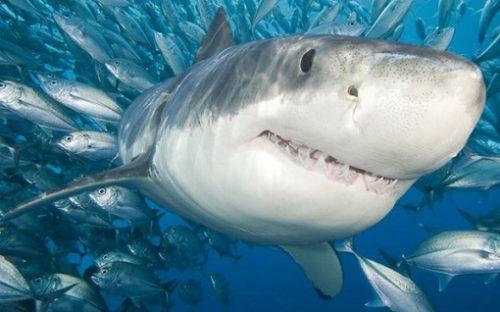 PANICĂ și TEROARE în Spania! Un rechin s-a apropiat PREICULOS