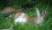 sursa foto - http://www.dejeanul.ro