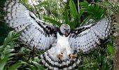 sursa foto - http://bellasavesdeelsalvador.blogspot.ro