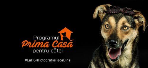 Prima casa…pentru…CATEI!