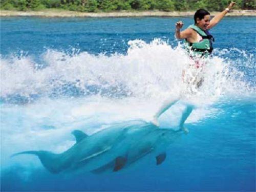 sursa foto - http://www.dolphinworld.org