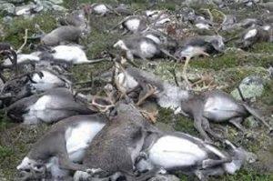 Peste 300 de RENI au fost omorati de fulger!