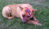 MARE ATENȚIE! Se propune SCĂDEREA pedepselor de la maxim 7 ani la maxim 2 ani pentru BESTIILE care torturează animalele!!!