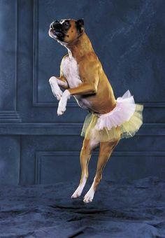 caine-dansator