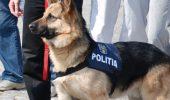 Cainii politisti scosi la licitatie, la Constanta, si-au gasit stapani!