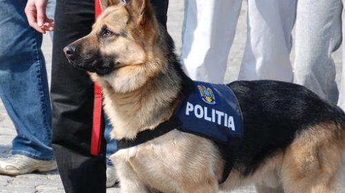 Alți 7 câini polițiști sunt scoși la vânzare….Cel mai mare preț de pornire este 3.021,67 lei, pentru un …metis!