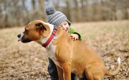 Dr. N. Bercaru: Educatia cainelui e asemanatoare cu cea a copilului