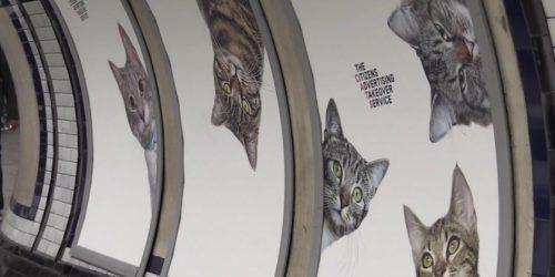 O stație de metrou din Londra a fost umplută cu fotografii de pisici