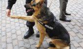 TRIST – Pare că nici de câinii scoși la licitație de IPJ Constanța nu-i pasă cuiva!!!!