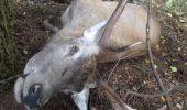 Șase persoane sunt urmărite penal în cazul de braconaj la cerb, semnalat în august de WWF-România