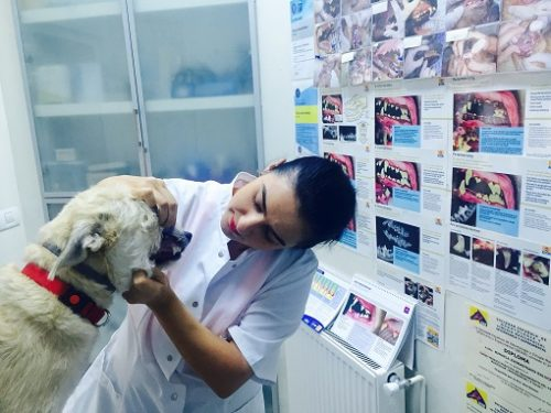 80% dintre animalele de companie au boli dentare