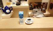 Noua găselniță: Căsuțe realiste pentru hamsteri! FOTO
