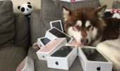 Extravaganta unui chinez! Ce nevoie are COCO de OPT IPhone7?
