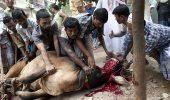 ȘOCANT- Străzi acoperite de sângele animalelor sacrificate, în cadrul unui ritual barbar!