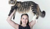 Ludo - cea lunga.... sursa foto - http://www.lifewithcats.tv