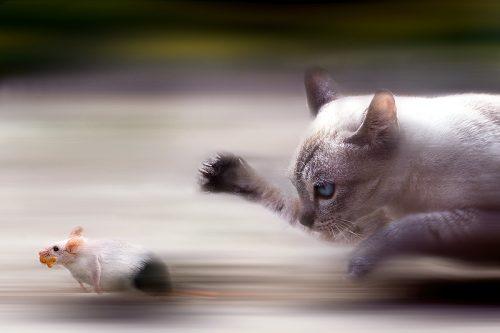 Care este ISTORIA pisicii. FELINA este un SPIRIT bun sau rău?