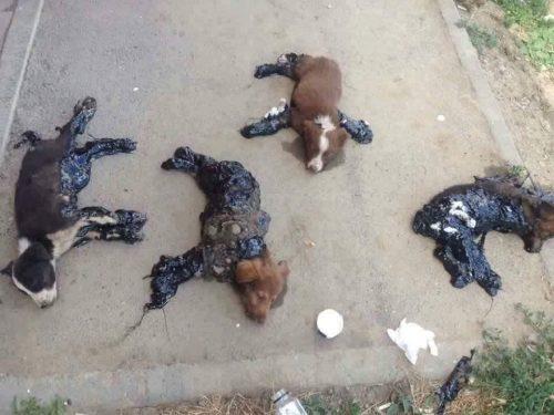 PEDEPSE MAI MARI PENTRU UCIGAȘII DE ANIMALE!!!