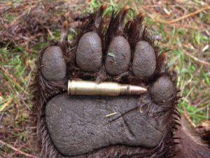 Din nou – ÎMPOTRIVA uciderii animalelor sălbatice!