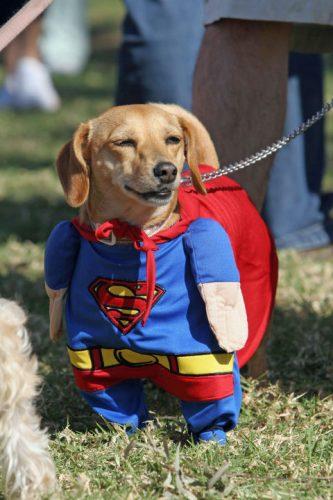 Super...dog!