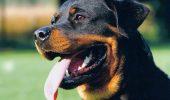 A dat ordin câinelui rottweiler să atace polițiștii