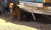 EMOTIE: Reactia incredibila a unui caine care timp de 10 ani a stat legat si nu a vazut pe nimeni