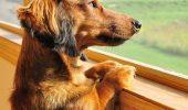 Câinii înțeleg TIMPUL?