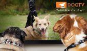 sursa foto - http://dogtv.com