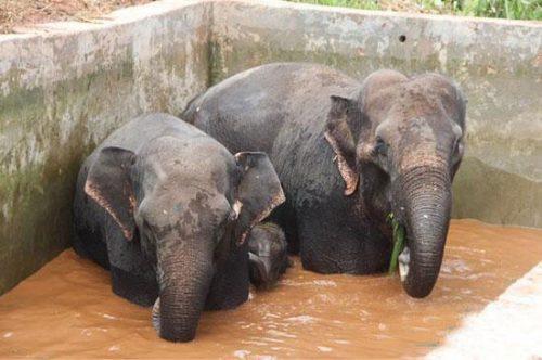 elefanti-2