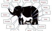Rezolvarea problemelor cu animale!!!