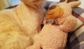 sursa foto - http://www.lovemeow.com