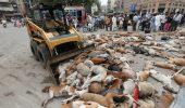 Cruzime de neimaginat! Autoritatile pakistaneze au otravit peste 700 de caini si i-au lasat pe strada