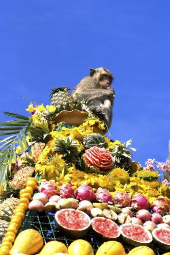 Maimuțe, la un banchet de 5 stele!