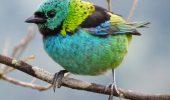 """Peste 200 de specii de păsări amenințate cu dispariția, neincluse pe """"lista roșie"""""""
