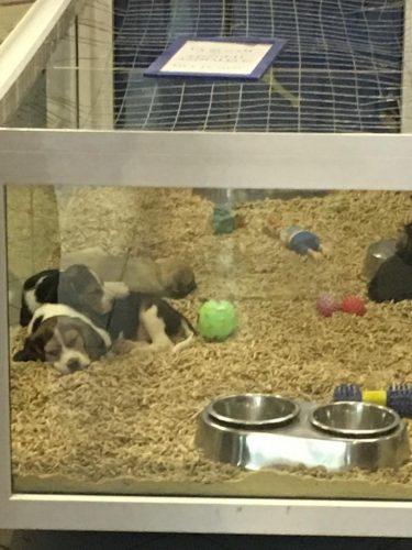 Achizitionati puii de caine direct de la crescator! Priviti ce se intampla in Pet Shop-uri!
