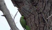Societatea Ornitologică a reluat programul de protejare a păsărilor sălbatice din București