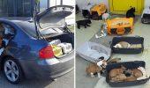 CONTRABANDĂ – A avut ideea sa ascunda, in portbagajul masinii sale, 47 de catelusi!!!!