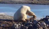 O lectie de viata! Prietenie intre un urs polar si un caine!