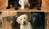 Află ce pot face iubitorii de animale ca să le scape de obiceiurile proaste