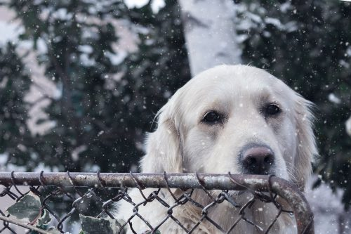 Schimba-i alimentatia pentru a-l face sa se bucure de iarna!