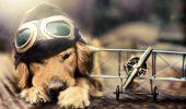 Condiții de zbor cu animalele!