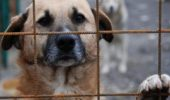 UPDATE. Ce se întâmplă ACUM cu administratorul adăpostului de animale, unde au fost găsite zeci de suflete fără suflare