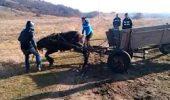 SOCANT: Amuzamentul unor tineri damboviteni, care maltrateaza un cal, pana acesta se prabuseste la pamant!