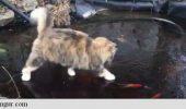Viralul cu pisica și…peștișorii!!